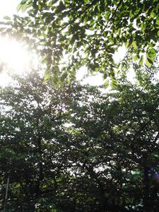 桜並木の木漏れ日