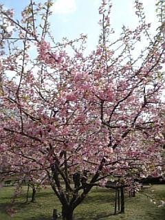小さな春1