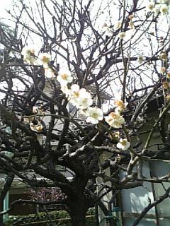 小さな春4