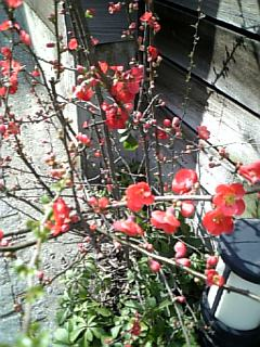 小さな春3