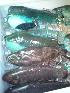 見た事ない魚