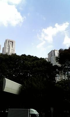 木の間からの都庁