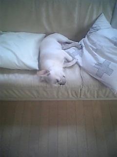 寝てる、のぼるくん